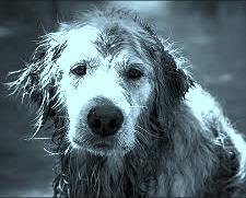 雨の犬【岩淸水・言葉の説明】