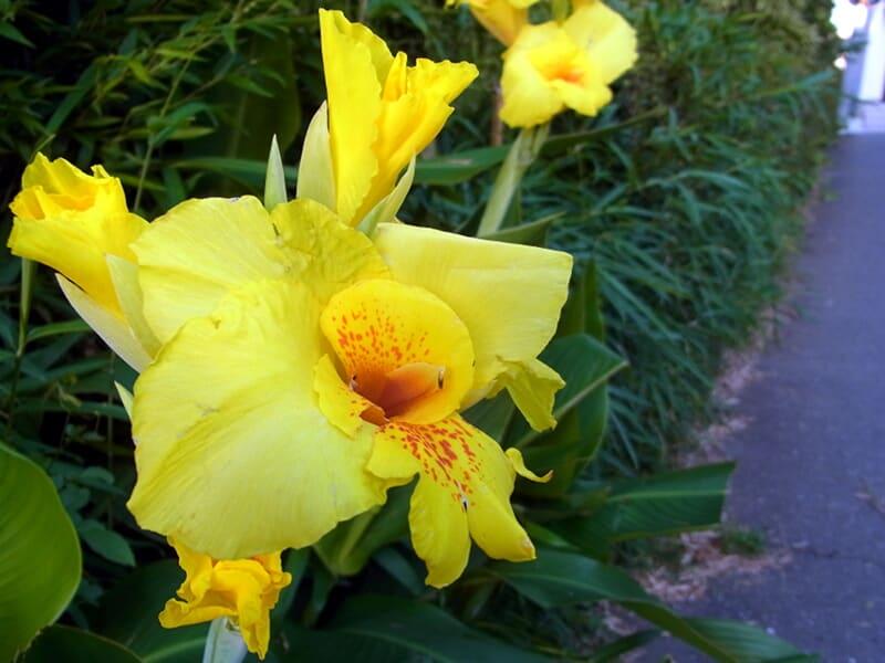 06月23日 黄色い花