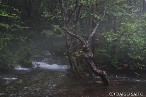 水辺の立木