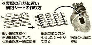 実際の心筋に近い細胞シートの作り方