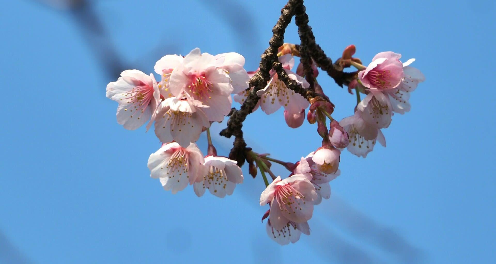 花 別名 の 梅 の