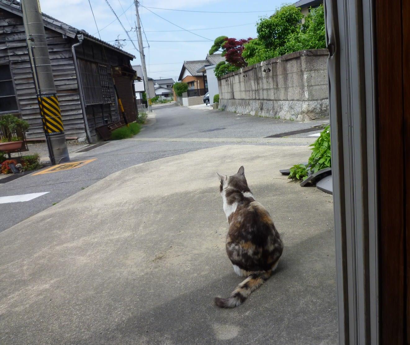 番猫・・・?の画像
