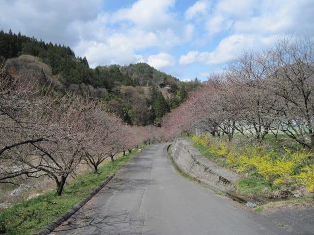 園原の<桃源郷>と<天空の楽園>の画像