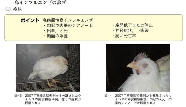 症状 鳥 インフルエンザ