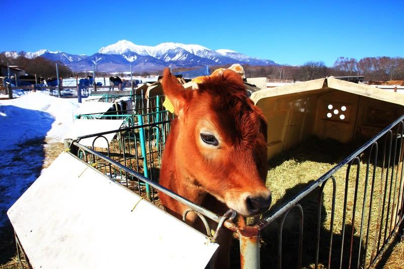 馬と牛のいる風景 その1 - 風景...