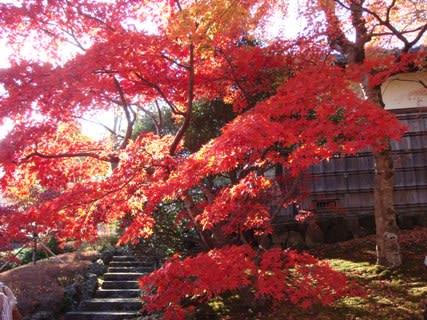 紅葉の苔庭その5