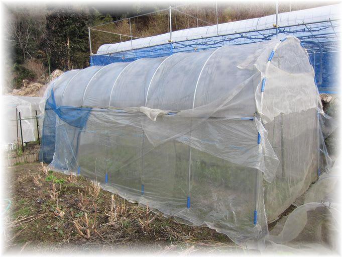 雨よけハウス 2012年2月28日