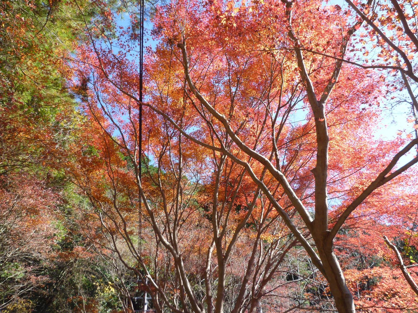 紅葉狩りの画像