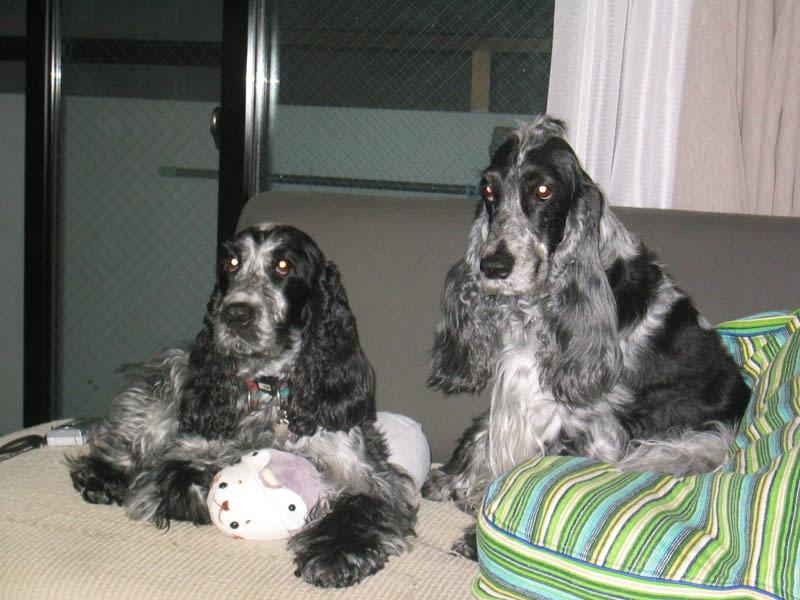 2006_135