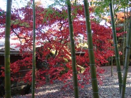 紅葉の苔庭その2