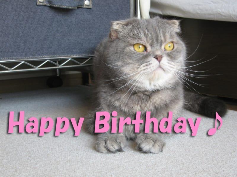 Happy_happy_birthday