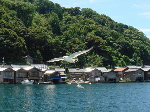伊根の船屋とカモメ