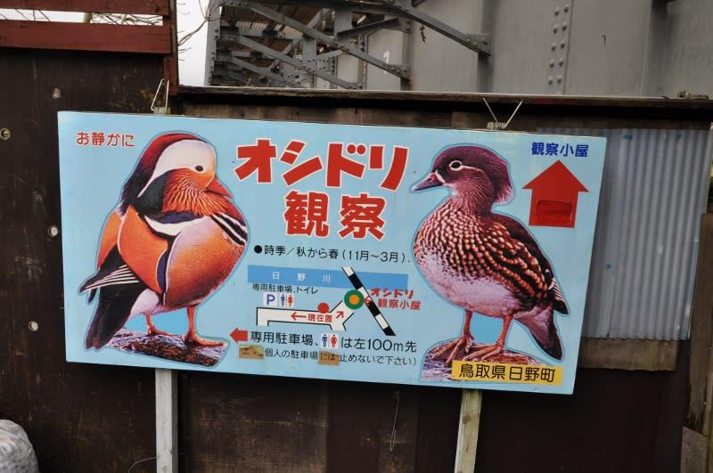鳥取県日野町の オシドリ 12月11日 - 気ままに