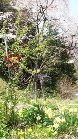 飛騨の山猿@飛騨マーベリック新聞・小沢一郎&共産党アレルギーを捨てオリーブの樹を育て日米安保を根底から見直して欲しい!!