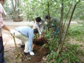 竹の地下茎と奮闘