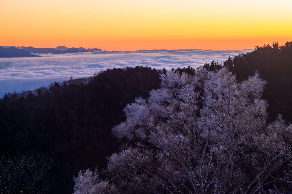 岳樺霧氷と雲海の写真