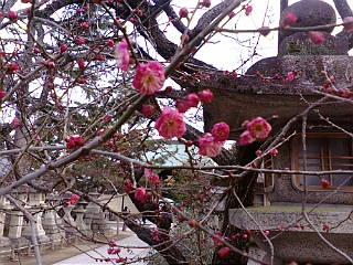 京都、初天神に来ています。