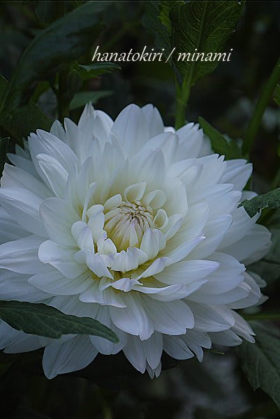 *花ときおり* minamiのガーデンリフォーム