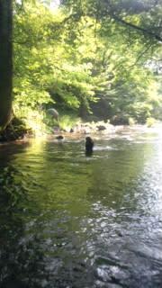 川遊び34℃
