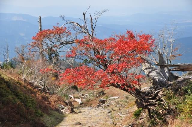 英彦山紅葉