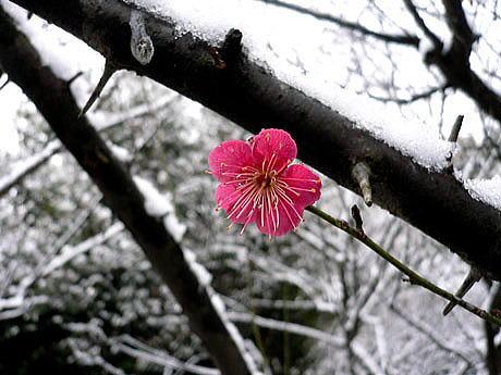 2010 02 17 マスコミが中川一郎を殺した 【わが郷】