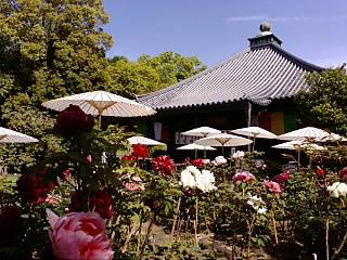 乙訓寺に来ています。