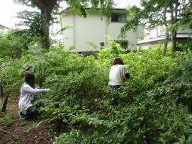 低木に絡む蔓の除去1.JPG