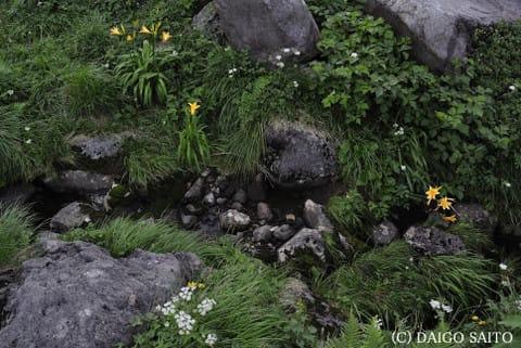 花々の雰囲気Ⅱ