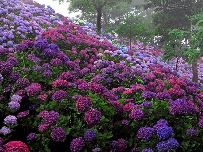 紫陽花が美しい in 桃源郷岬 (宮崎) - 旅するデジカメ 我が人生