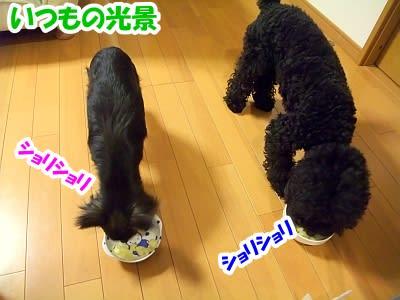 https://blogimg.goo.ne.jp/user_image/2d/86/8546ea8573077b5c4f02777019590059.jpg