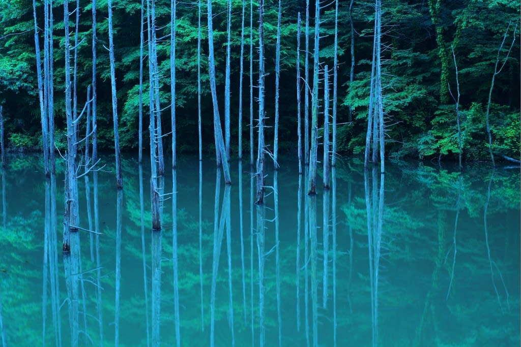 大田切池(立ち枯れ)の写真