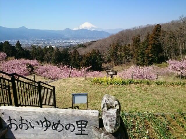 おおい ゆめ の 里 河津桜の穴場スポット おおいゆめの里