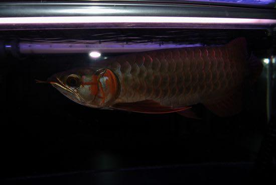 """アルディカ1便、~聖HIJIRI~の発色過程。 - Aquarium""""THE ..."""