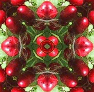 Star-flowered-false-solomonseal berries