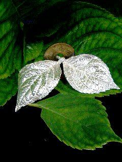 アジサイの葉っぱです。