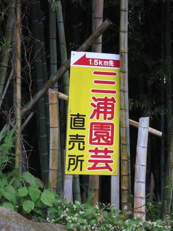 40 紫陽花 あじさい ポット苗(3号) - ヤフオク!