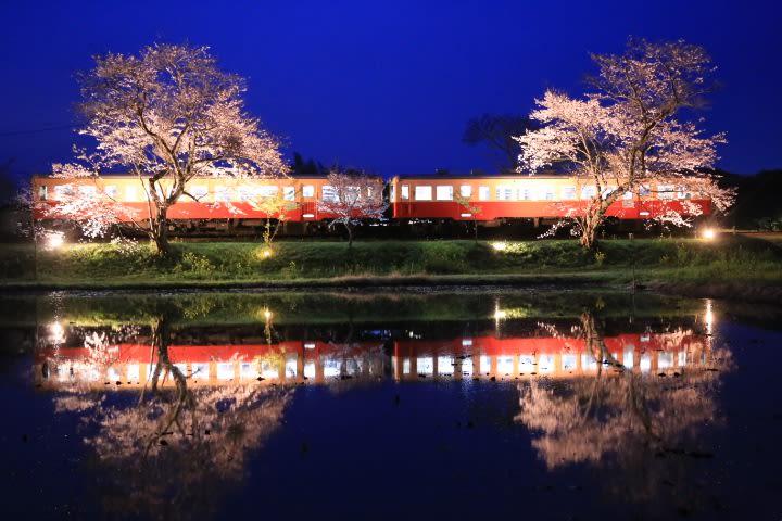 小湊鉄道 桜ライトアップ