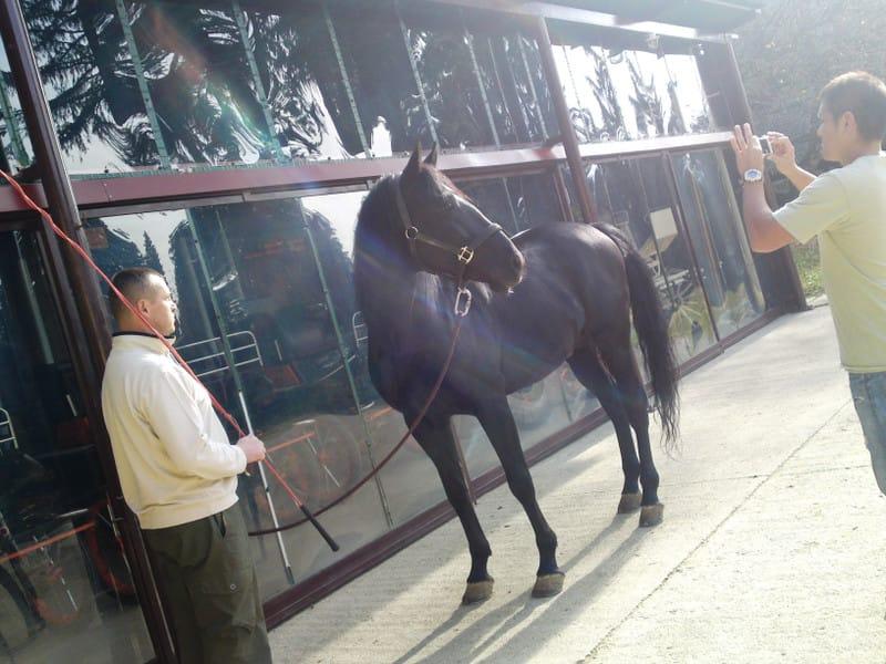 131103_horse03