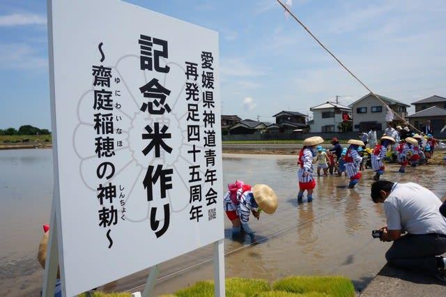 愛媛県神道青年会 再発足45周年記念事業 御田植祭 - 三津嚴島神社ブログ