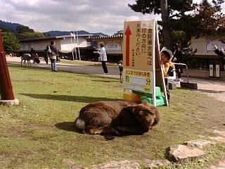 奈良正倉院展に来ています