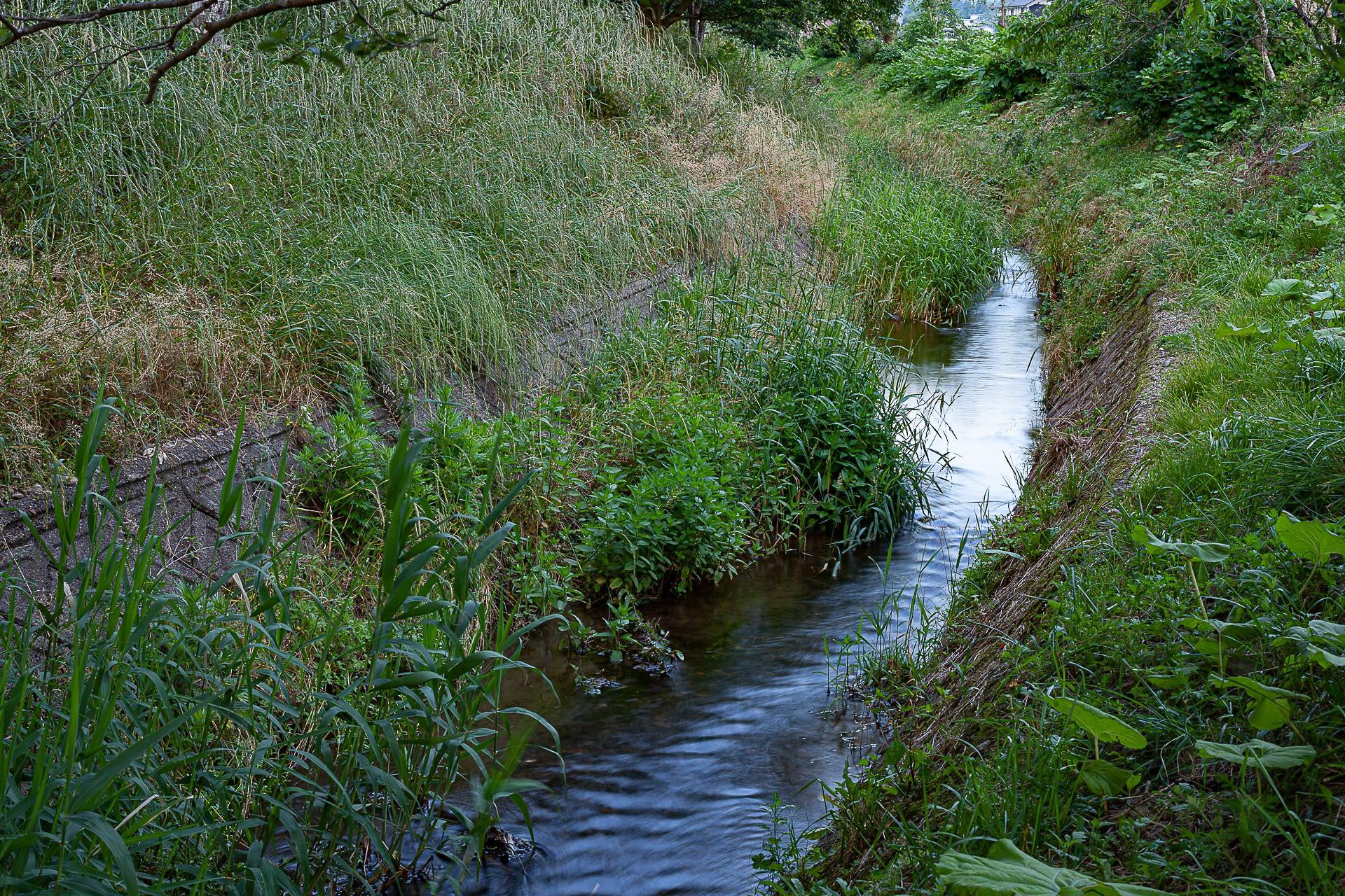 ゲンジボタルの生息地の写真