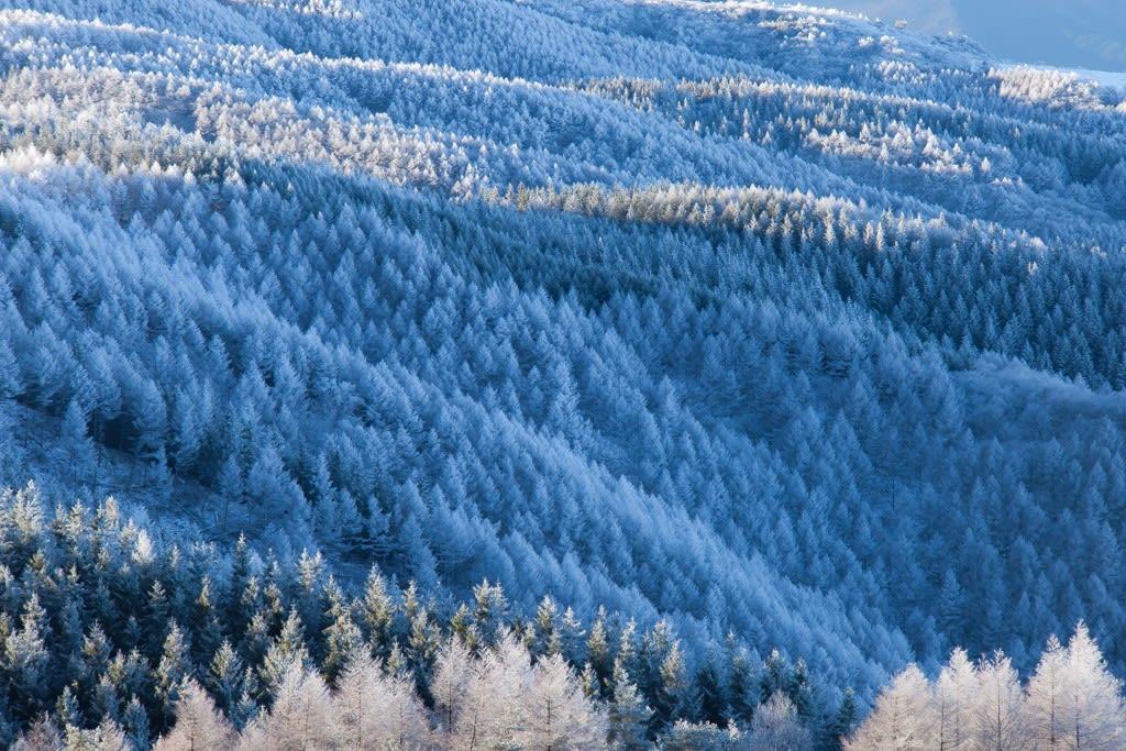霧氷(高ボッチ)の写真