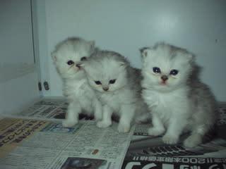3匹とも男の子なんです、めじらしいで~す^^