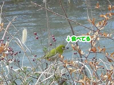 https://blogimg.goo.ne.jp/user_image/2f/ff/7c263be18c782a2ade74e50dc672f08f.jpg