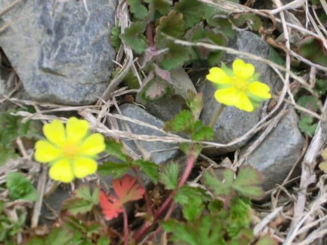 小さい花3