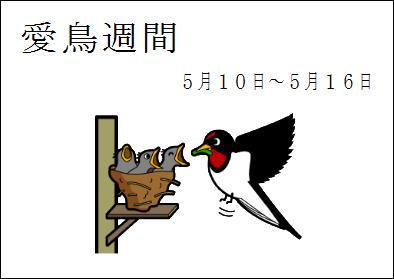 愛鳥週間 by はりの助