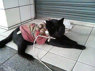 広島太郎さんという人がいる。彼は自由人だ。いつもネコを連れているが、今日はネコちゃんだけが・・・どうしたのかなぁ?ネコちゃんの名前はわかりません。