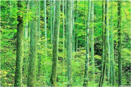 Tree2_068