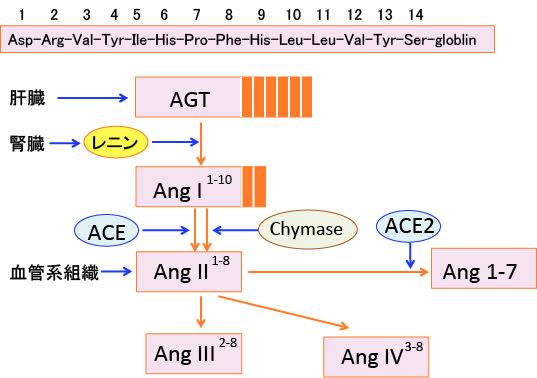499)アンジオテンシンII阻害剤...