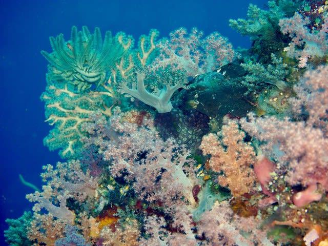 サンギヘ諸島